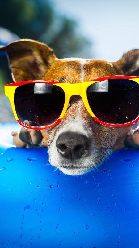 Cool Pool Dog Wallpaper