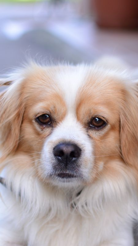 Cute Sad Dog Wallpaper