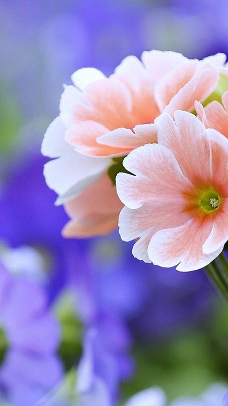 Beautiful Flower - HD Wallpaper Wallpaper