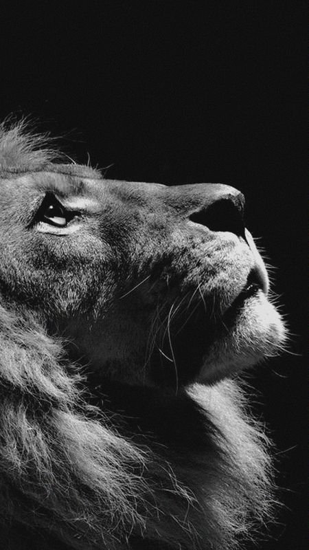 Hopeful Lion Wallpaper