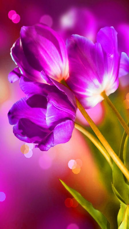 HD colourful Flower Wallpaper