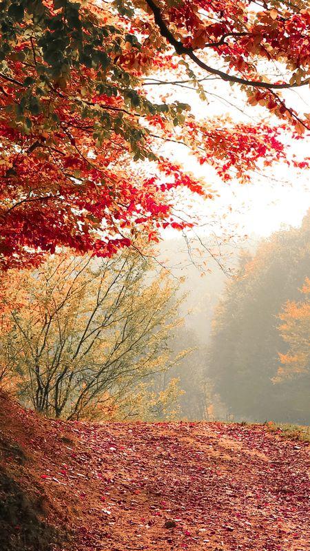 Autumn season tree Wallpaper