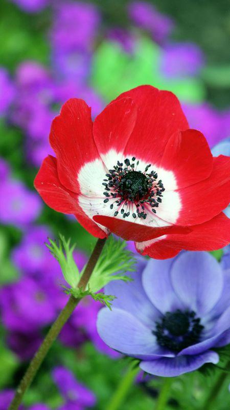 HD Wallpaper - Beautiful Flower Wallpaper