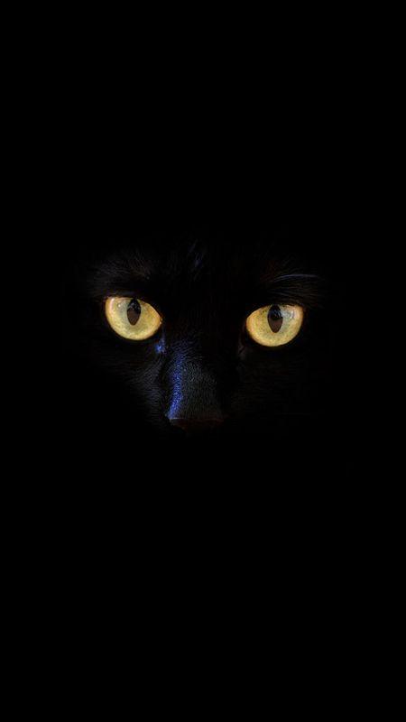 HD black cat Wallpaper