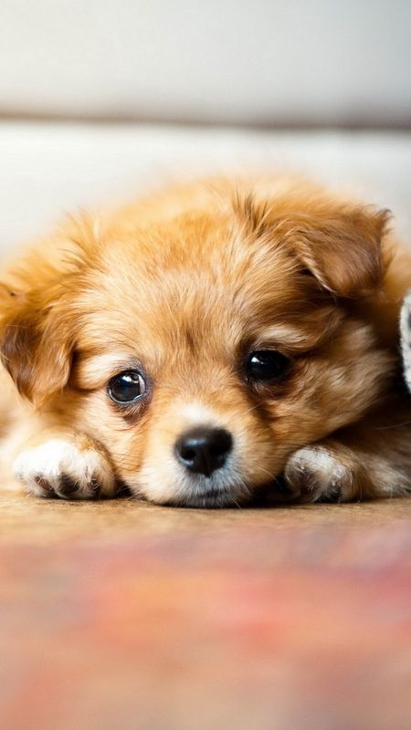 Sad Puppy Wallpaper