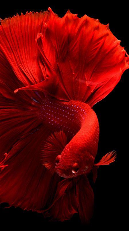 HD Beautiful Fish Wallpaper