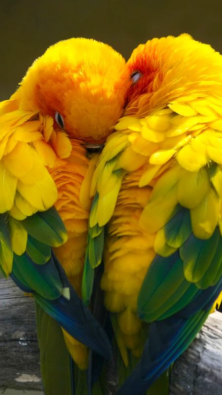 Love birds Wallpaper