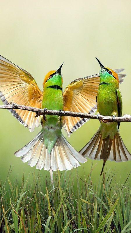 Birds Wallpapers Download Mobcup